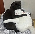 Two hugging cats.jpg