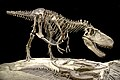 Tyrannosaurid FMNH PR308.jpg