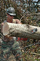 US Navy 050904-N-0553R-655 A U.S. Navy Seabee assigned to Navy Construction Battalion One (NMCB-1) help clear trees downed by Hurricane Katrina in the Gulfport area.jpg