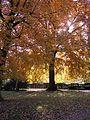 Un arbre remarquable - panoramio.jpg