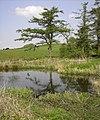 Upper Torrs Pond - geograph.org.uk - 791618.jpg