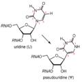 Uridine to pseudouridine.PNG