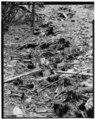 VIEW OF RIFFLE BLOCKS DISCARDED FROM SLUICE BOX, LOOKING NORTHWEST - Bonanza Hydraulic Mining Site, Sluice Box, Swamp Gulch, Salmon, Lemhi County, ID HAER ID,30-SAL.V,2-F-2.tif