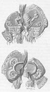 Valdemar 3.s segl