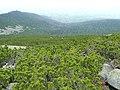 Velická dolina, Vysoké Tatry, 2012, 004.JPG
