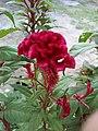 Velvet flower.jpg
