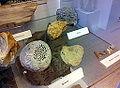 Verkiezeld hout, sponzen, koraal en zeelelies, fossielencollectie Museum Het Land van Valkenburg, Limburg.jpg