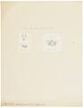 Vespertilio carolinensis - 1700-1880 - Print - Iconographia Zoologica - Special Collections University of Amsterdam - UBA01 IZ20800183.tif