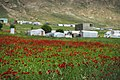 View of a poppy field in Sardashte Camp for Ezidi IDPs in May of 2019, atop Shingal mountain 03.jpg