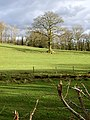 View over the hedge - geograph.org.uk - 146917.jpg