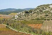 Vineyards in Roquessels 02.jpg
