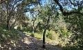 Wallace Stegner Pathway along Matadero Creek.jpg