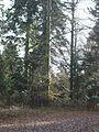 Wanderung im November - panoramio (29).jpg