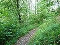 Wanderweg zur Bertaburg - panoramio.jpg