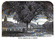 Washington Elm, Cambridge.jpg