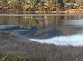 Water Birds in Port Cygnet.jpg
