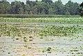 Water Lilies 016.jpg