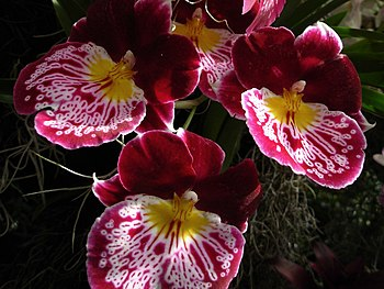 Clearing out a few old orchid show NOID photos.