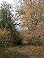 Wayland Wood - geograph.org.uk - 135658.jpg