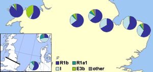 Haplogroup I-M253 - Image: Weal