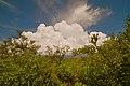 Weedon Island preserve - panoramio (1).jpg