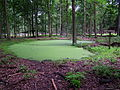 Weiher Damwildgehege Wildpark Alte Fasanerie Klein-Auheim Juni 2012.JPG