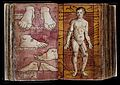 "Western Manuscript 93, veins of the foot and ""vein man"" Wellcome L0023523.jpg"