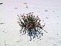 Whitesands-flowersviolet.jpg