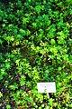 Wikipedia 13. Fotoworkshop Botanischer Garten Erlangen 2013 by-RaBoe 072.jpg