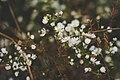 Wild Daisies (Unsplash).jpg