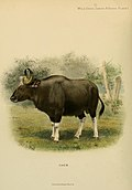 Wild oxen, sheep and goats of all lands, living and extinct (1898) (14746449064).jpg