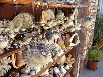 Wildlife trade - Assorted seashells, coral, shark jaws and dried blowfish on sale in Greece