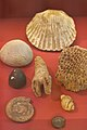 William Smiths fossils.jpg
