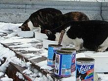 Chats mangeant de la sauce en conserve