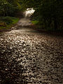 Woodland road (10493469505).jpg