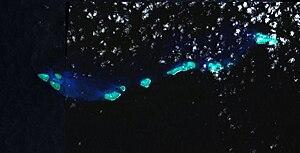 Wreck Reefs - Satellite View of Wreck Reefs