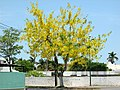 Yellow tree.jpg