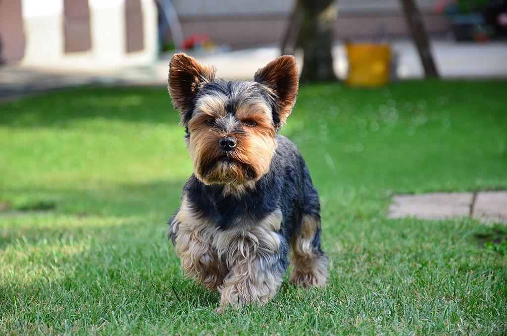 Adopt A Dog Mid Missouri