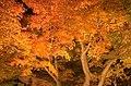 Yuushien Garden at night, Matsue City; November 2014 (07).jpg