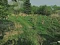 ZEGG grey water permaculture leach field.jpg