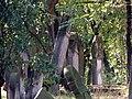 Zduńska Wola, Kacza 18, Cmentarz żydowski-004.JPG