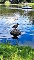 Zelenogradsk - Ducks on Tortilin Pond.jpg