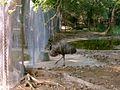 Zoo 300.jpg