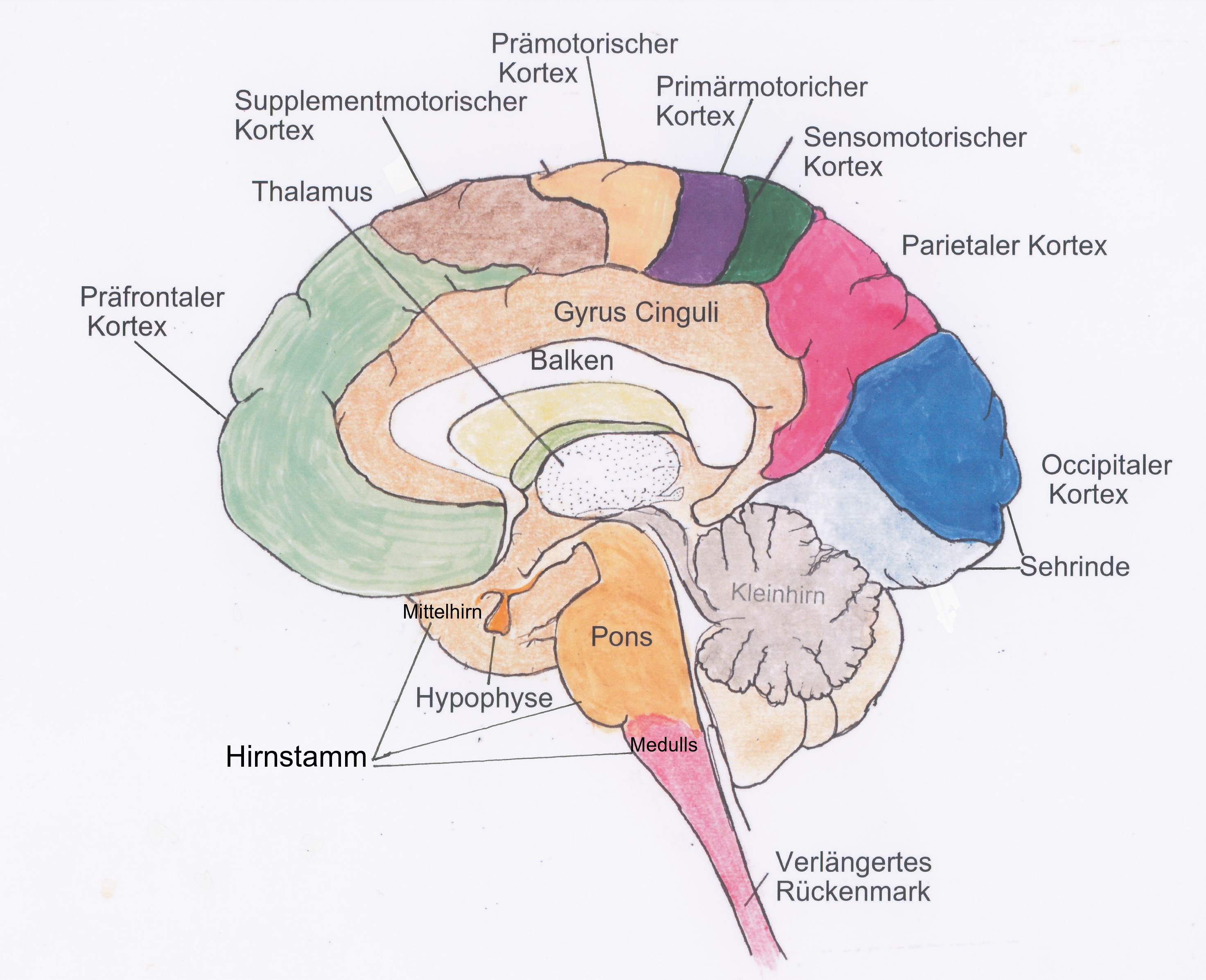 Großhirnrinde (Cortex cerebri) || Med-koM
