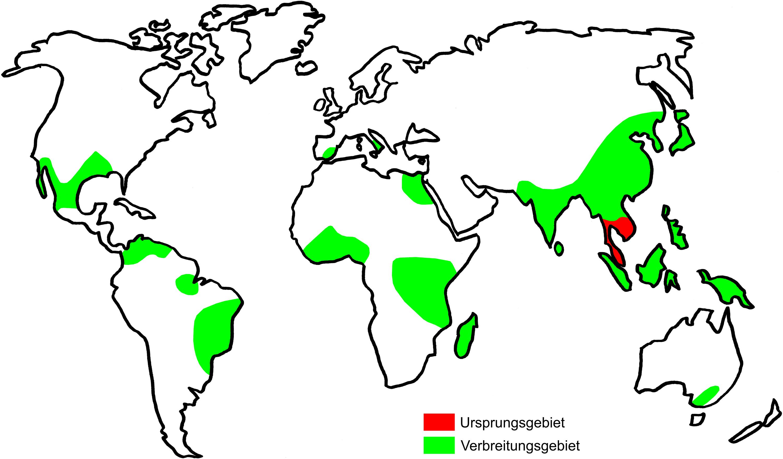 reisproduktion weltweit 2015