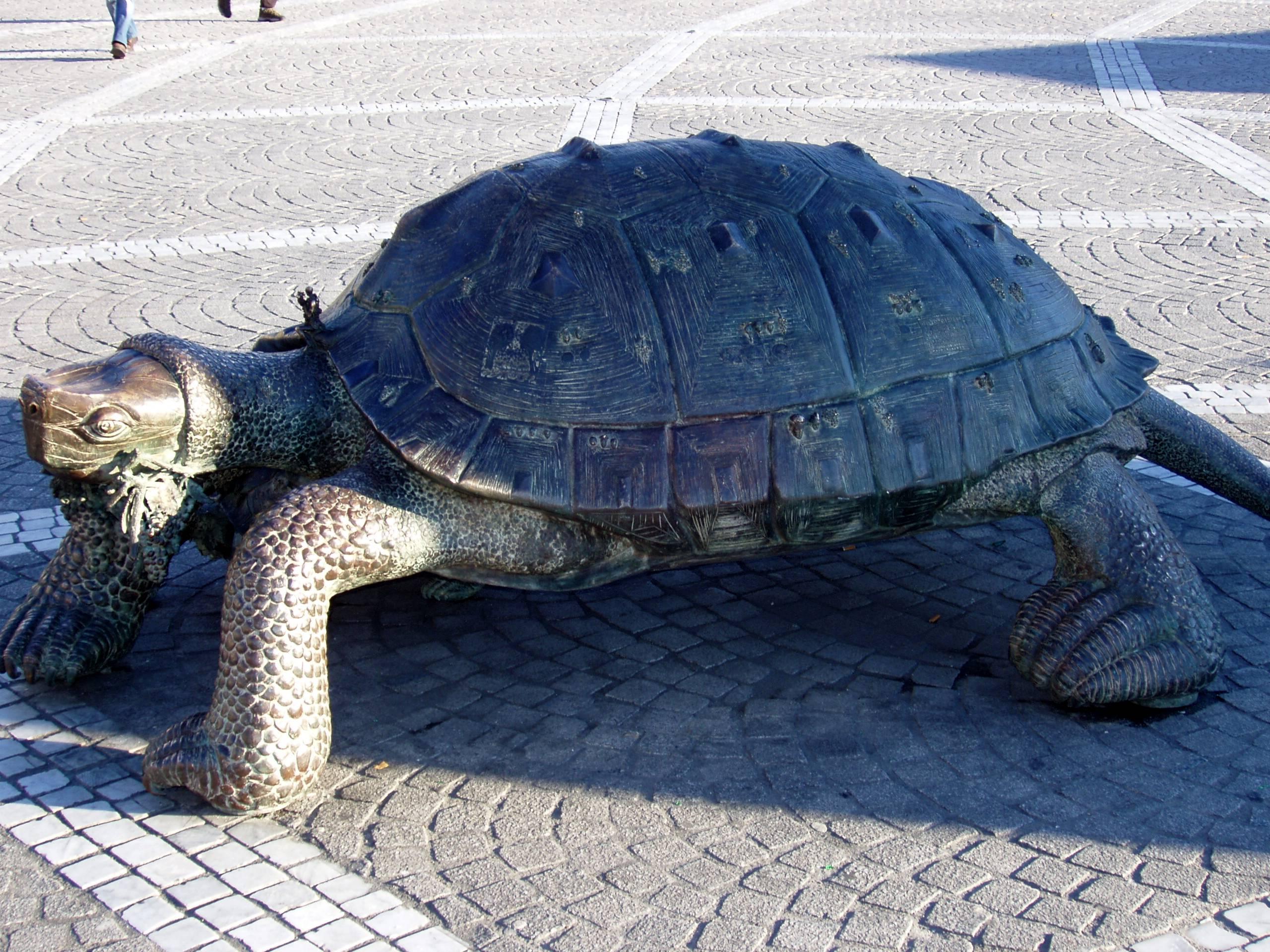 Tolle Schildkröte Vorlage Druckbar Galerie - Beispielzusammenfassung ...