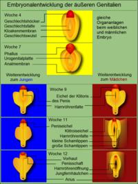 berlin sex treffen klitoris fingern