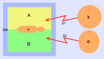A: Bodenplatte A, B: Bodenplatte B, H: Hund, zw: Hundezwinger, S1: Stromstoß von k, S2: Stromstoß von e, k: Alpha-Tier k (Kreis), e: Alpha-Tier e (Ellipse)