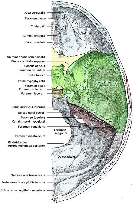 Mittlere Schädelgrube (Fossa cranii media) || Med-koM