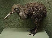 Kiwis  Wikipedia